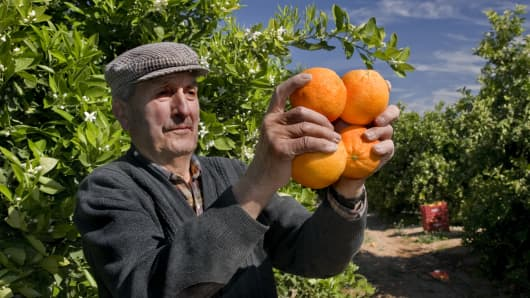 A farmer in Valencia, Spain shows off his crop of oranges. The area is famous for producing high quality fruit.