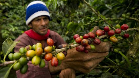 A coffee-bean picker at a plantation in Colombia.