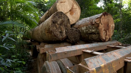 Logging in the Amazon is closely linked with road building.