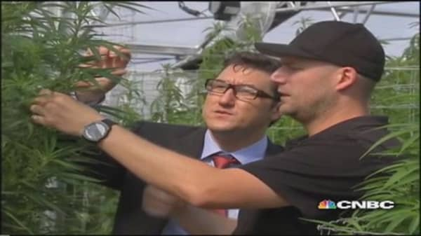 Pot entrepreneurs invest in the 'green rush'