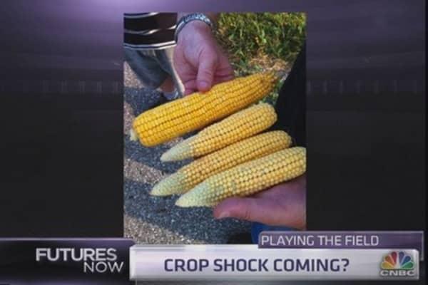 Crop expert: The hidden problems with the corn crop