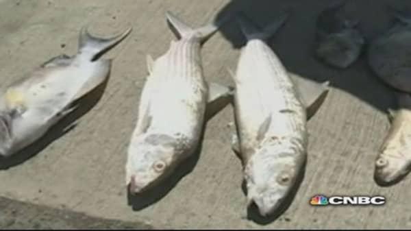 Who knew? Molasses causes massive fish kill in Hawaii