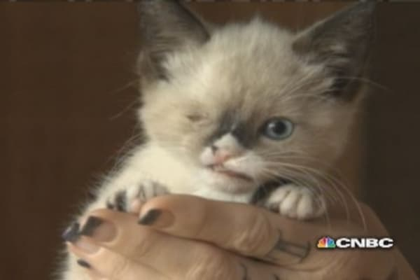 One-eyed pirate kitty takes Internet by storm