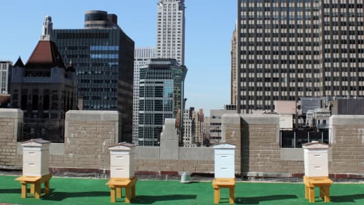 Beehives on roof of Waldorf Astoria.