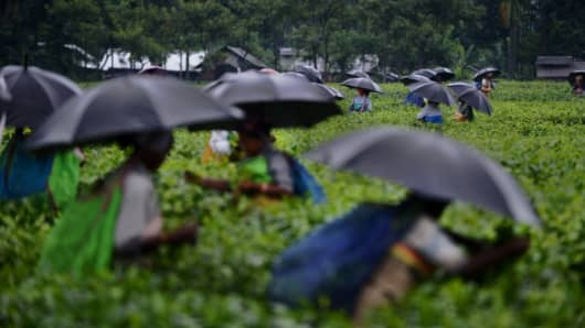 Indian women use umbrellas to shield themselves from rain as they pluck leaves from tea shrubs in a tea garden near Binnaguri in the north eastern Indian state of Assam, on June 6, 2013.