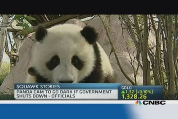No more Panda Cam  if US shuts down!
