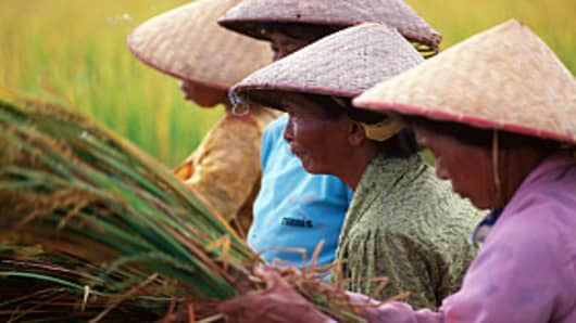 Women harvesting rice in Sangeh, Bali, Indonesia