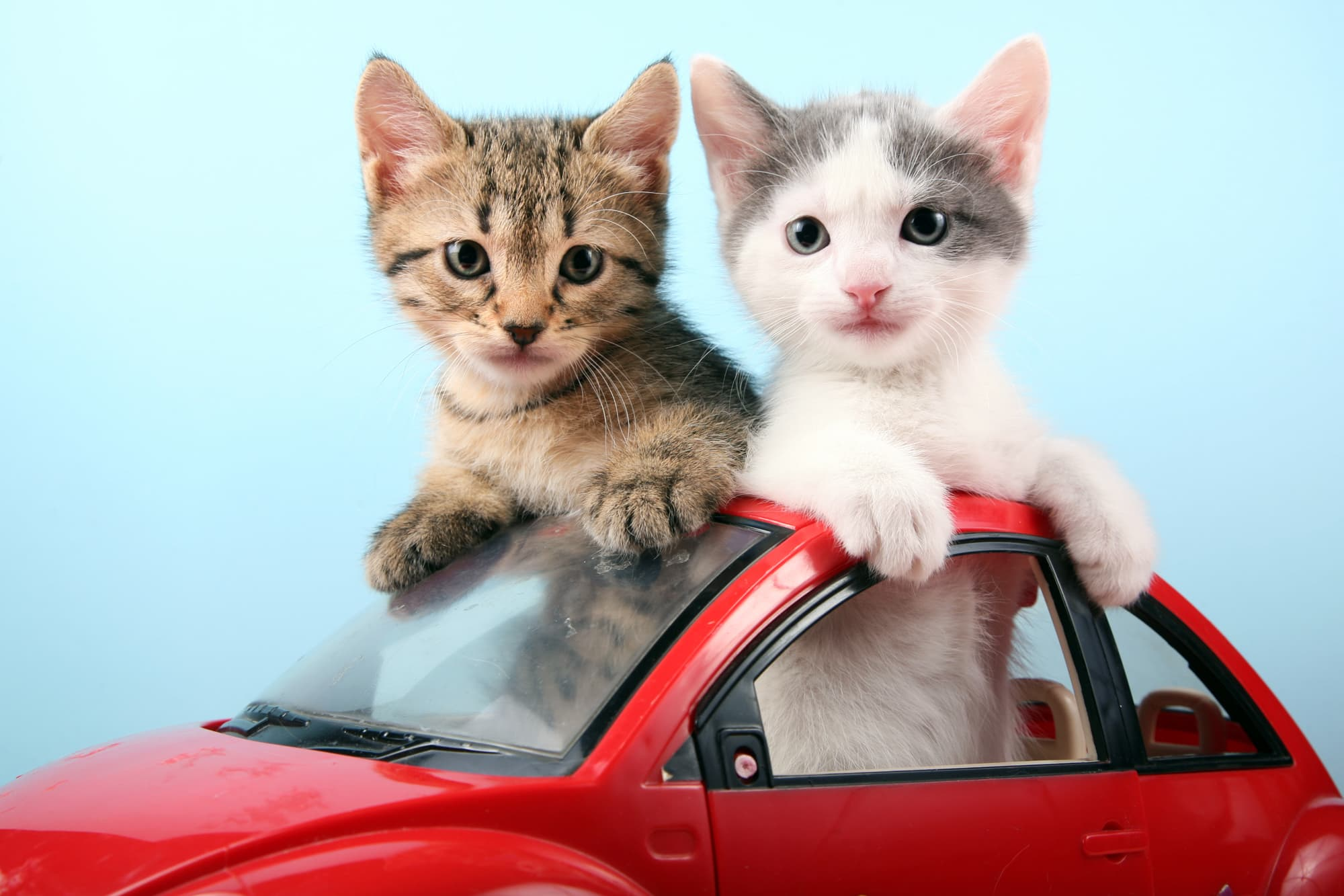 controversial car start up u0027s new ploy kitten rides