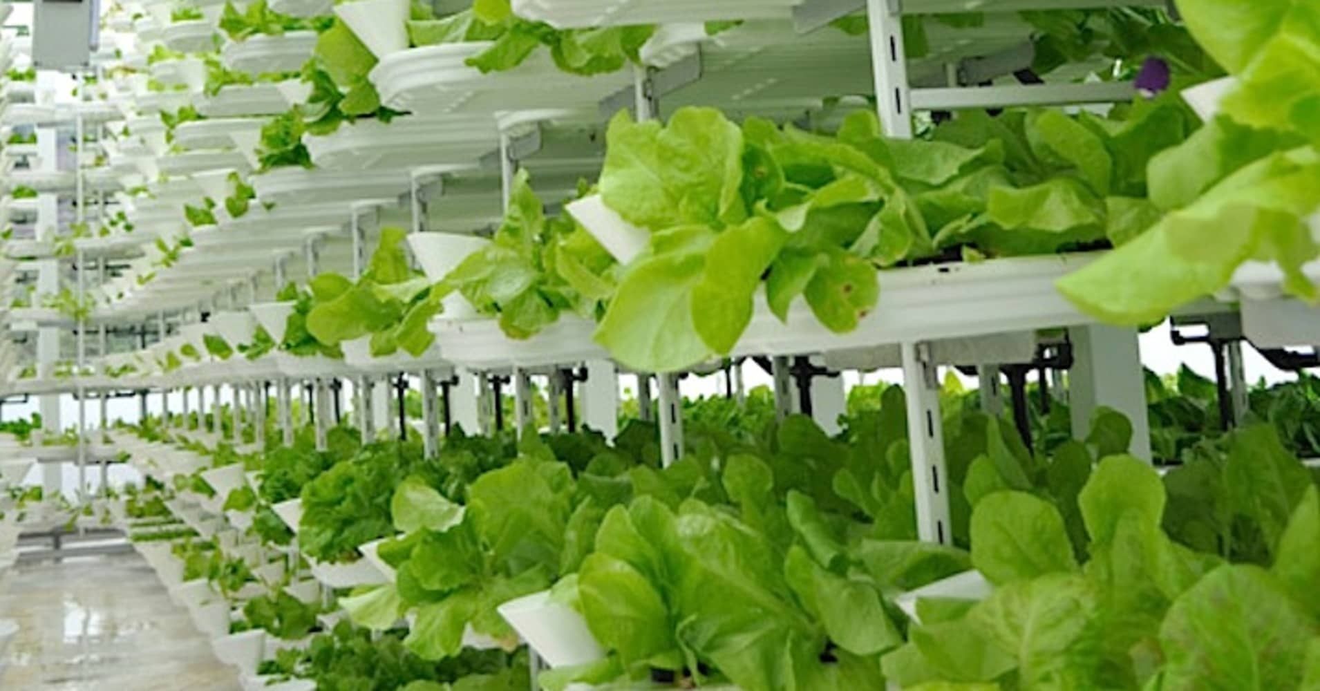 Vertical Farming A Hot New Area For Investors Commentary