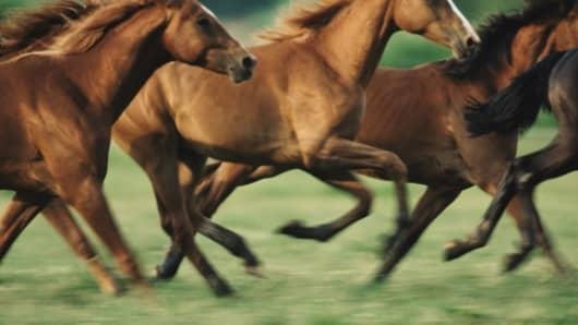Premium Horses Running