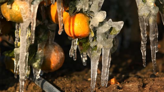 Frozen tangerines are shown with misters running to avoid as much damage as possible during a cold snap in the San Joaquin Valley, Dec. 6, 2013, in Orange Cove, Calif.