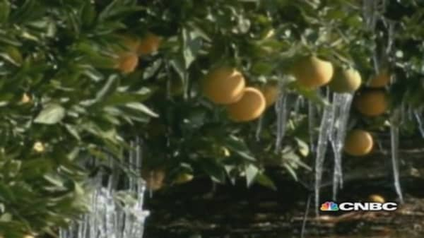 California citrus growers struggle to save crop