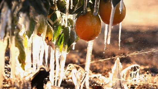 Frozen oranges with misters running to avoid as much damage as possible during a cold snap affecting the San Joaquin Valley citrus crop, Dec. 6, 2013 in Traver, Calif.