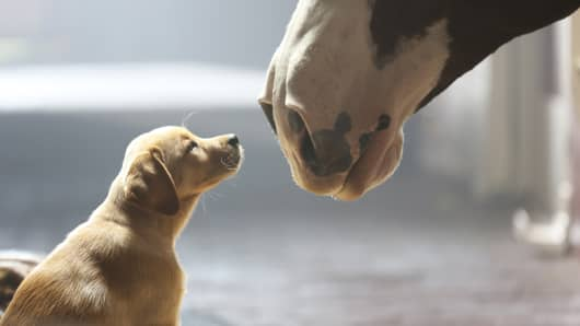"One of Anheuser-Busch's Super Bowl ads, ""Puppy Love,"" follows up on a previous theme."