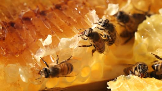 Honeybees at work on their hive.
