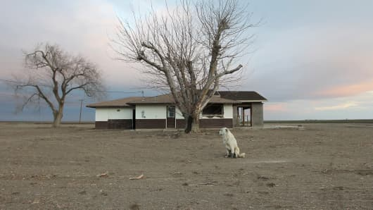 A dog hangs around an abandoned farmhous