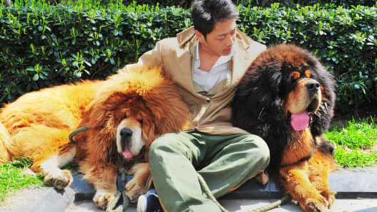 An unidentified man posing for a photo with two Tibetan mastiffs after they were sold at a 'luxury pet' fair in Hangzhou, in eastern China's Zhejiang province.