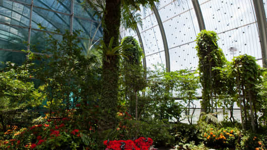 Singapore's Changi Airport butterfly garden