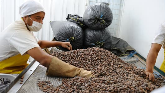 Ecuadorean Pacari Chocolates employees select organic cocoa beans at their factory in southern Quito