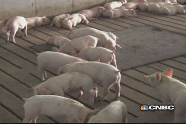 Mysterious virus sends pork prices soaring