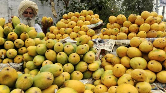 An Indian fruit vendor displays mangoes