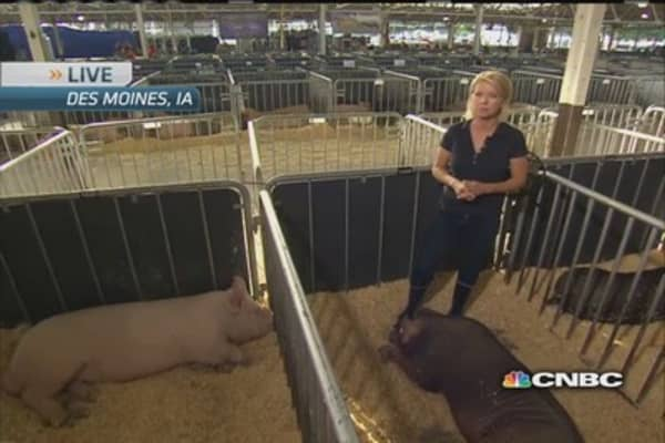 Bacon news: The pig show must go on!