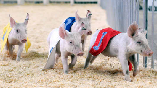 Racing pigs take to the course at the World Pork Expo at the Iowa State Fairgrounds in Des Moines.