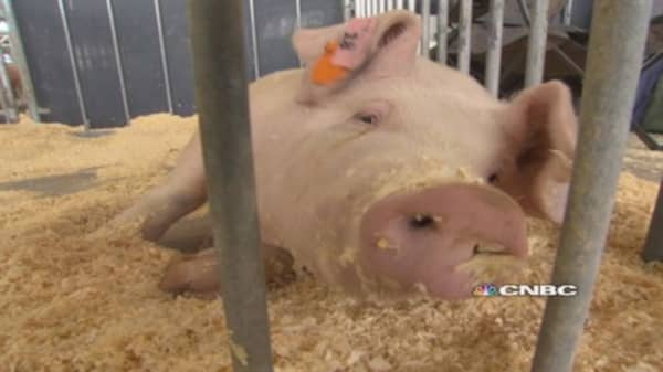 Farmers raise biosecurity to fight deadly pig virus-NEEDS DESCRIPT