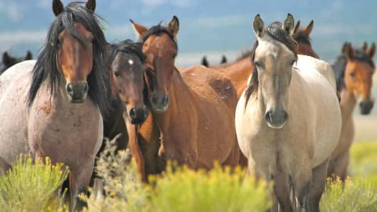 Mustang Monument S Wild Horses Ready To Welcome Luxury