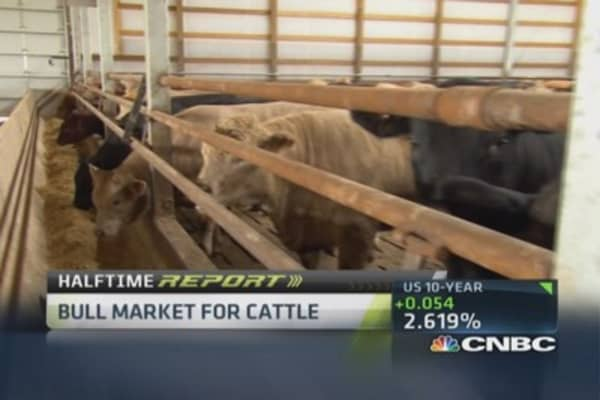 Bull market for cattle
