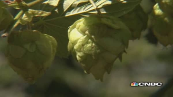 Hops prices hopping