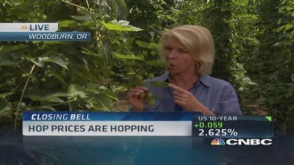 Trendy IPAs push hop prices