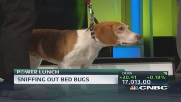 Sniffing out bed bugs