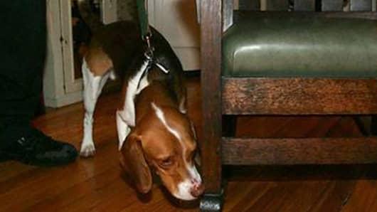 Roscoe the bedbug dog.