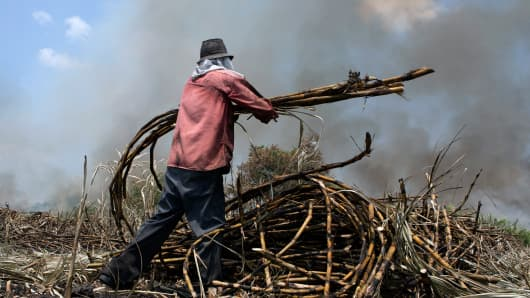 A worker gathers cut sugar cane for the Emiliano Zapata sugar mill in Zacatepec, Mexico.