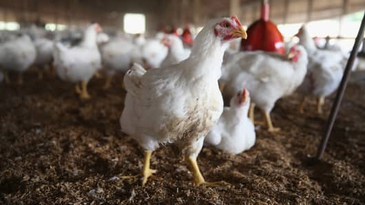 A file photo of a poultry farm.