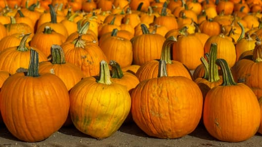 Rows of fresh large pumpkins at the Pierce College Farmer's Market in Woodland Hills, Calif.