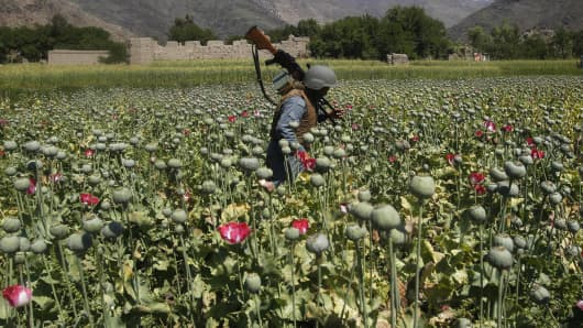An Afghan policeman destroys poppies during a campaign against narcotics in Kunar province, April 29, 2014.