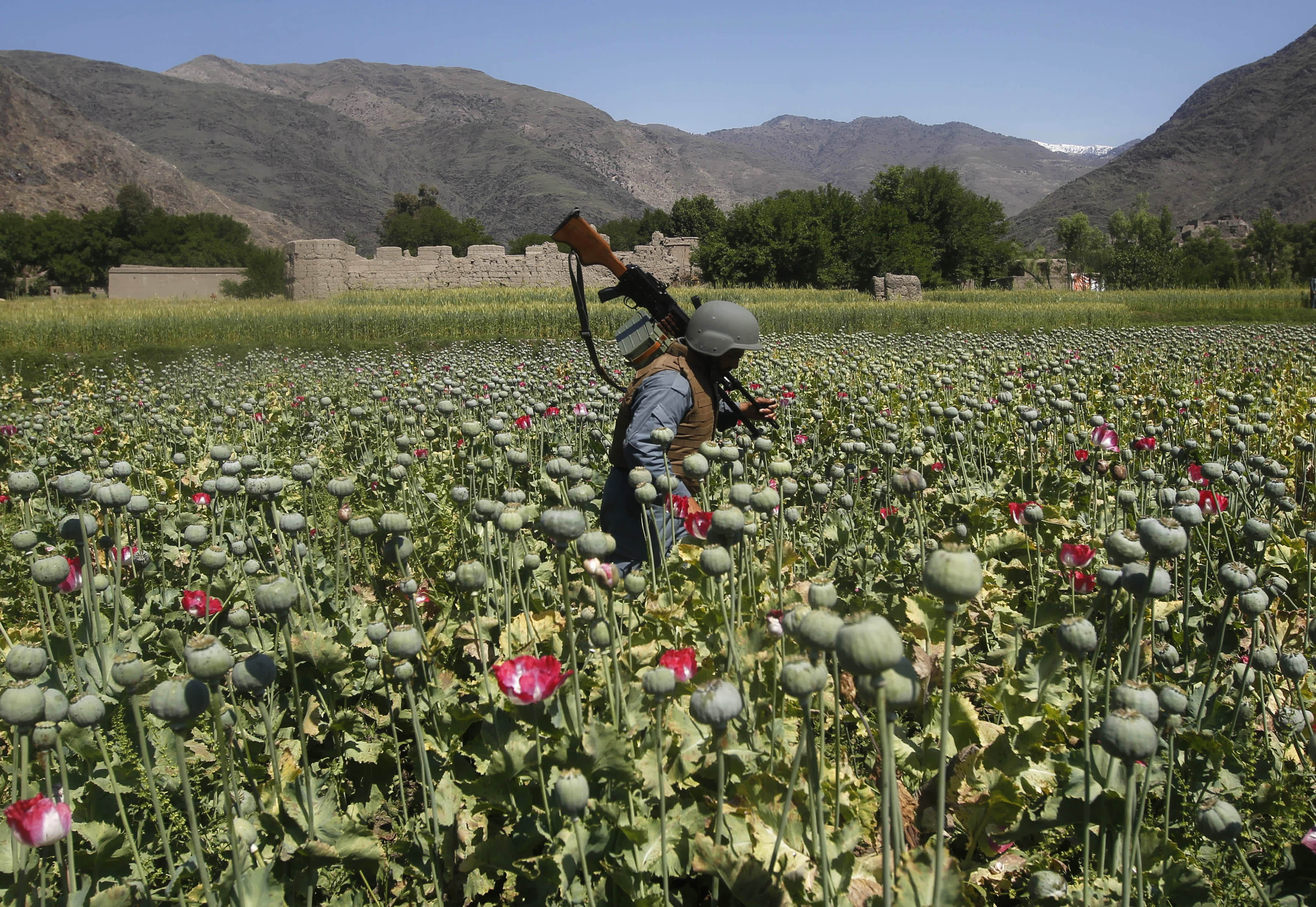 the heroin and opium drug trade in afghanistan and pakistan The high costs of afghanistan's opium afghan drug trade for both afghanistan and the broader 50 times its price on the afghanistan-pakistan.