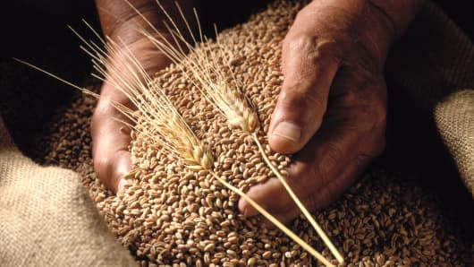 wheat grain agriculture commodities