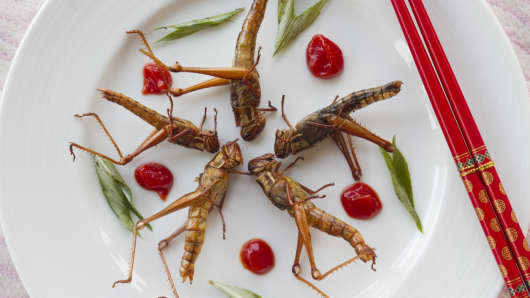 In certain countries in Southeast Asia, grasshoppers are eaten as a good source of protein.