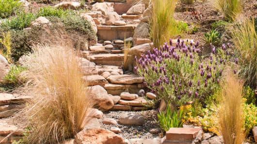 Drought resistant garden.