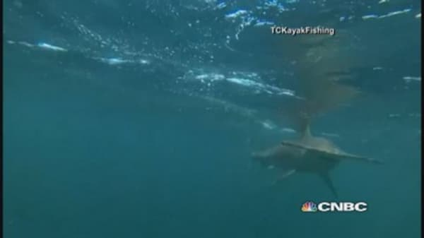 Hammerhead shark stalks kayakers in Flordia