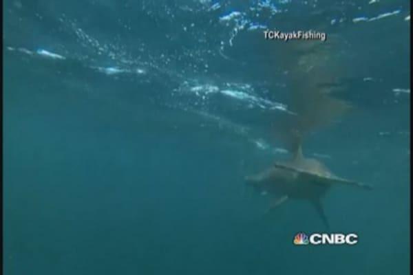 Hammerhead shark stalks kayakers in Flordia