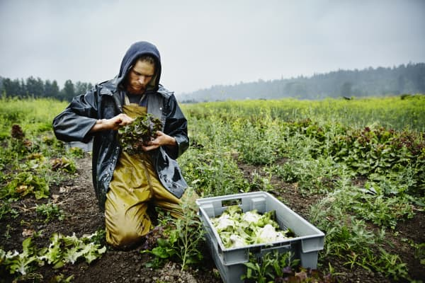 young farmers organic farmers