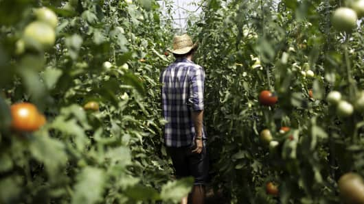 File photo: An employee moves through a green house growing tomatoes at the Clear Brook Organic Farm in Shaftsbury, Vermont.