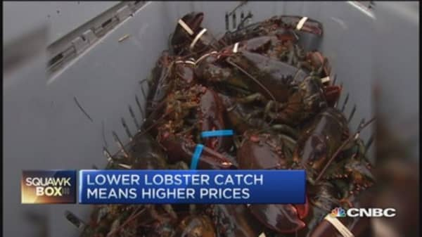 Pricey lobsters & worn out cows