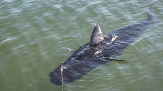 The US Navy's GhostSwimmer drone
