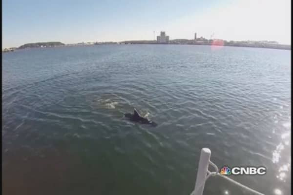 Navy tests robot shark