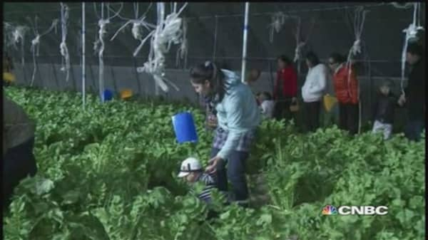 Amid food scares, young Chinese turn to organic farming